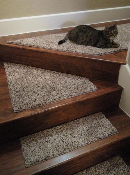 Cat And Custom Stair Treads