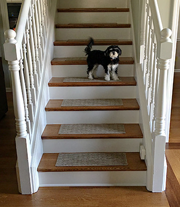How To Use Pet Assist Stair Treads