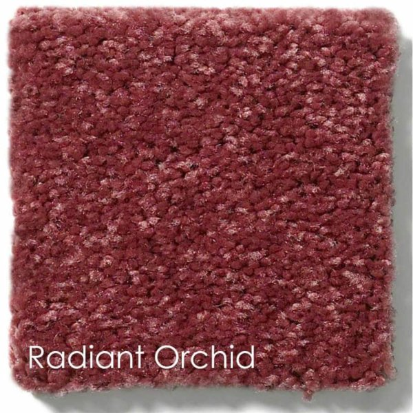 Dyersburg Cut Pile Indoor Area Rug Collection Radiant Orchid