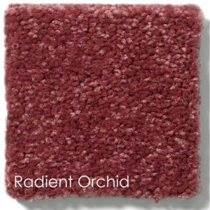 "Dyersburg Cut Pile Indoor Area Rug Collection | 1/2"" Thick 30 oz. Durable Cut Pile Indoor Area Rug Multiple Colors Radiant Orchid"
