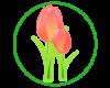 April Promo - tulip