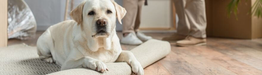 How To Choose a Pet-Friendly Rug